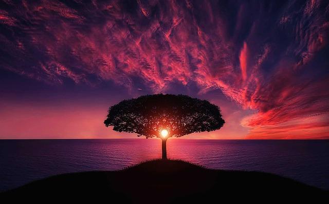 krásná fotka stromu.jpg